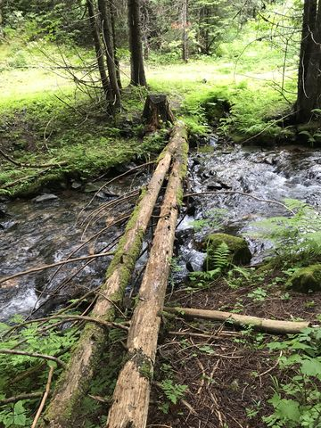 Two logs make crossing Gold Center Creek easy