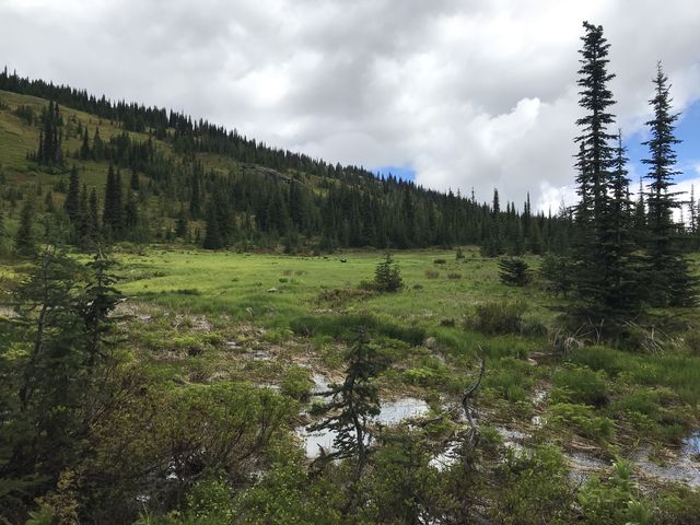 A pleasant meadow beneath Grandmother Mountain
