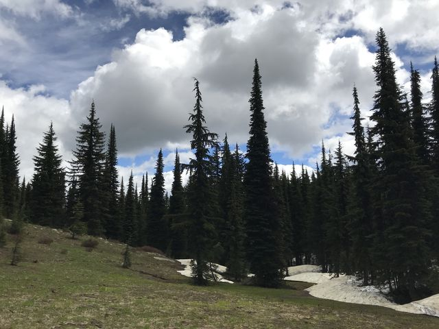 The hike along Grandmother Mountain is sprinkled with alpine meadows