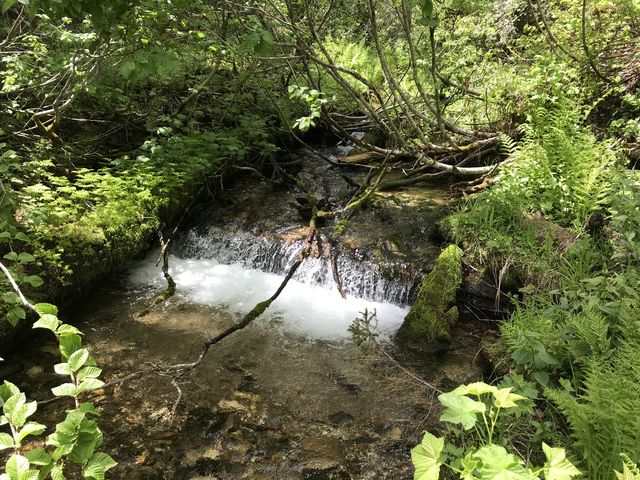 A tributary just before meeting Marble Creek