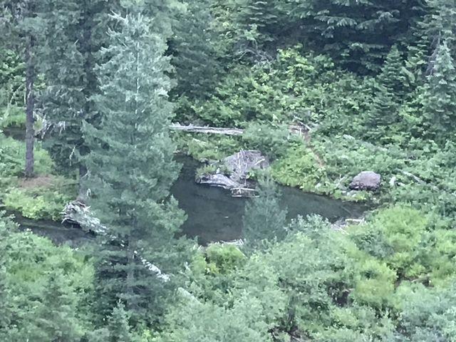 Beaver lodges on Swamp Creek