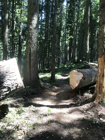 The wilderness is non-motorized. No chainsaws. Crosscut saws and elbow grease