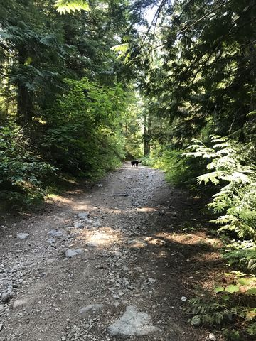The trail starts out on an old mining road