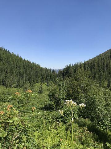 A look back towards Mullan from a broad basin below Lower Stevens Lake