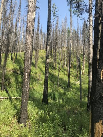 The trees in the upper section are burnt. Some of the larches survived with blackened trunks