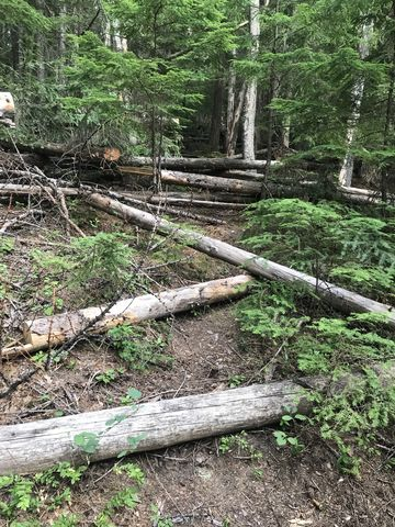 Unmaintained trail #980 is a jumble of fallen logs. And its uphill. For 2 miles