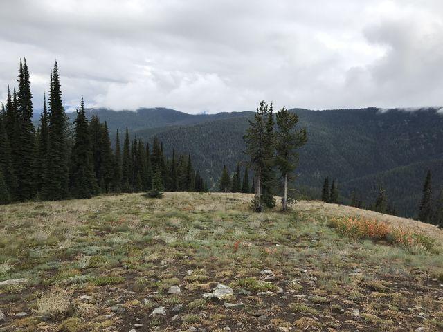 View from a grassy knoll below Granite Peak