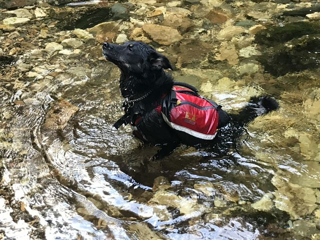 Naughty cooling down in Canyon Creek