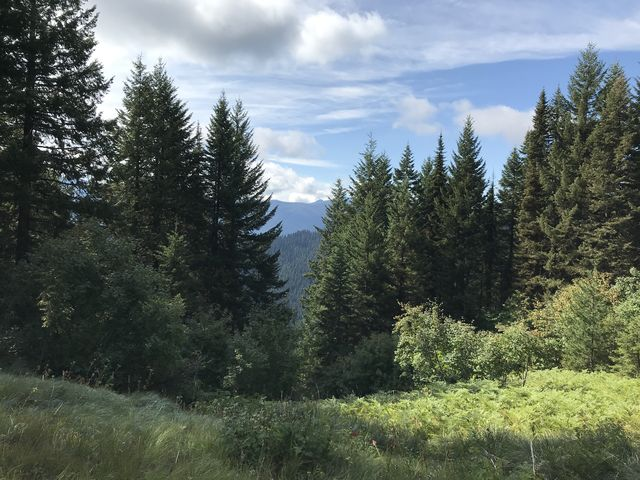 View from the Buck Creek trail as it nears FR-201