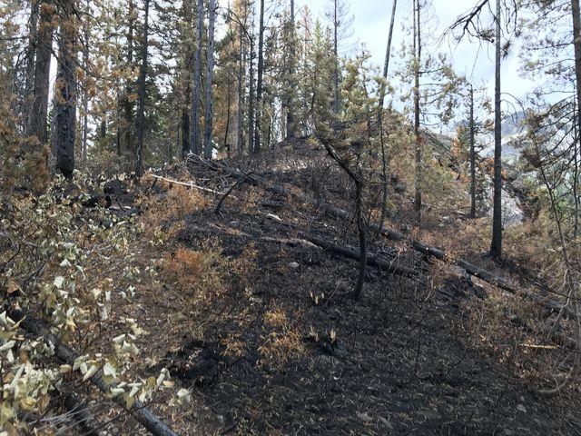 A recent burn (still smoldering)