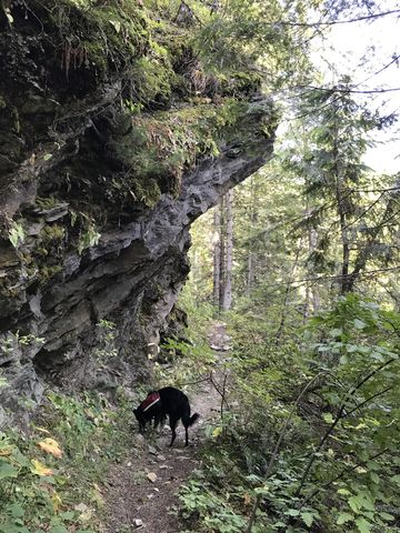 Trail #50 follows the Little North Fork beneath a rock outcropping