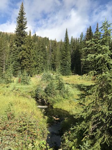A brook near Table Campground