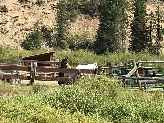 The USFSs equestrian operation at Red Ives