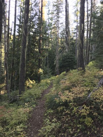 Well-maintained trail #924 switbacks up a flank of Goat Peak